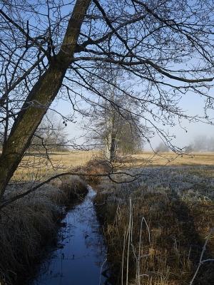Greifensee im Nebel
