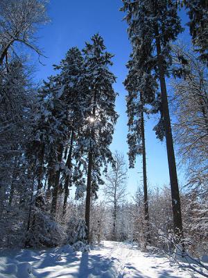 Winterspaziergang im Ustermer Wald