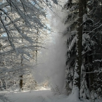 Winterspaziergang im Ustermer Wald