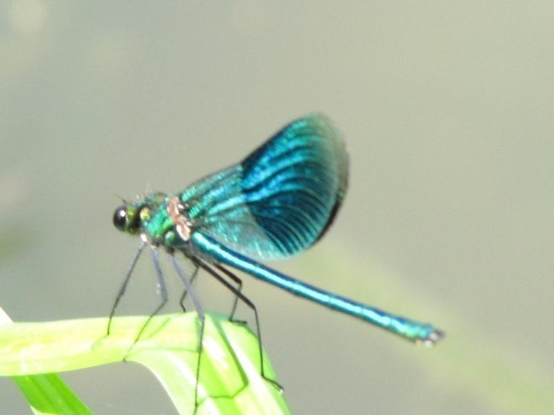 Libellen, Bauzüge und andere Konstruktionen…